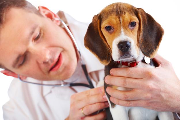 Produits vétérinaires